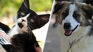 צילום: מיכלי בן משה, S.O.S חיות | ליאת מאיר, העמותה לחתולי רעננה