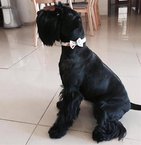 הכלבה טיטי (צילום: אלבום פרטי)
