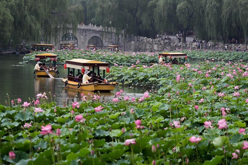 תיירים שטים בין פרחי לילי בפארק בייחאי בבייג'ינג. בעבר היה המקום גן ששימש את בני המלוכה בלבד, וכיום נחשב לאחד האטרקציות התיירותיות הגדולות בבירת סין  (צילום: AP)