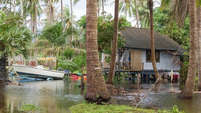 דוגר באיזורי מים ומטעי אורז. יתוש Culex (צילום: shutterstock) (צילום: shutterstock)