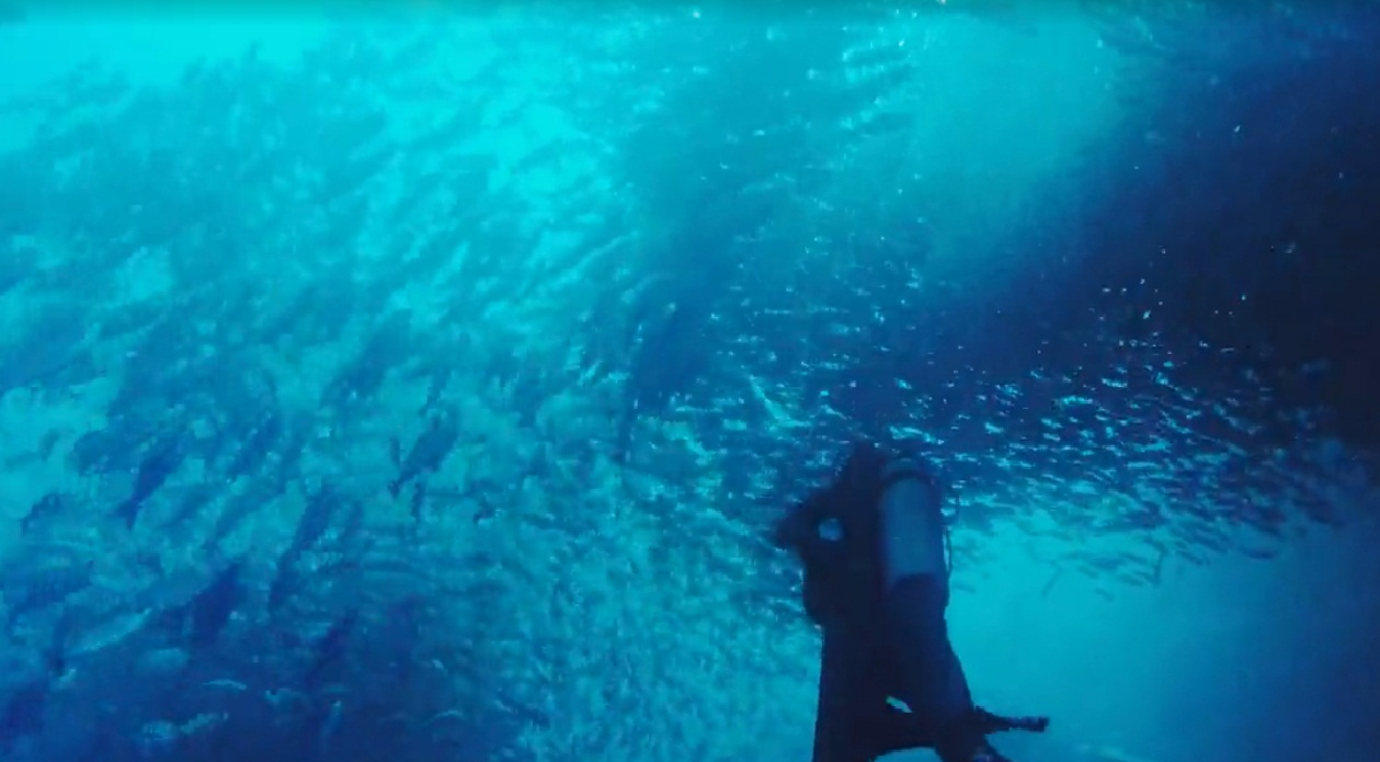 עולם המים באזור איי גלאפגוס