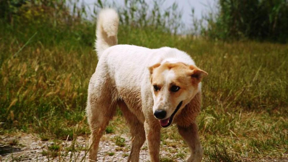 הכלבה ננטשה באזור התעשייה באשקלון (צילום אילוסטרציה) (צילום: ארז ארליכמן) (צילום: ארז ארליכמן)