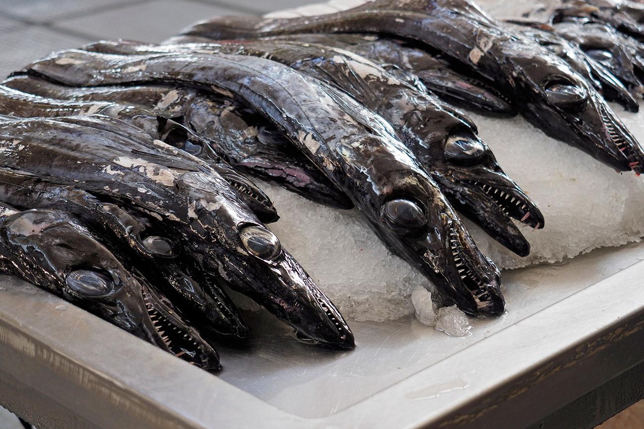 לא צלופח: הדג המקומי שנמשה עמוק מתוך המצולות (צילום: ליאור קורן) (צילום: ליאור קורן)
