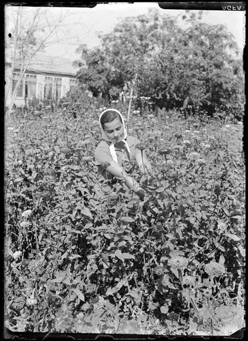 הפועלות חיו בתנאים קשים והציעו לתל אביבים תוצרת חקלאית טרייה (צילום: רודי ויסנשטין, הצלמניה)