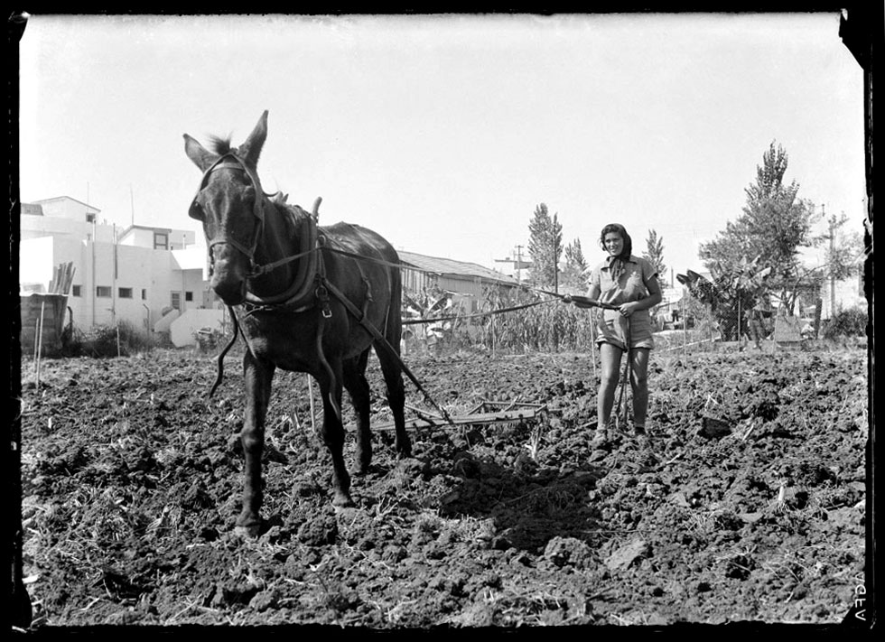 היום קשה להאמין שכך נראתה בשנות ה-30 של המאה הקודמת תל אביב. ''משק פועלות הצפון'' השתרע על שטח גדול, משדרות בן גוריון עד רחוב ארלוזורוב (שעדיין לא נסלל). בשדות הוכשרו נשים לעבודה חקלאית, בהשראת הגותו של א.ד. גורדון (צילום: רודי ויסנשטין, הצלמניה)