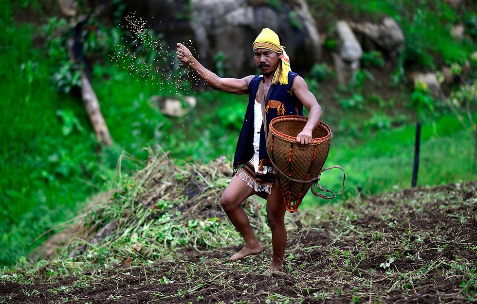 למען החקלאות: חבר שבט הטיווה בהודו משליך אורז בשדה, בטקס שנועד לסגוד לאל הטבע  (צילום: EPA)