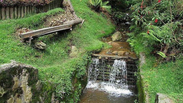 טיול אקולוגי ושקט עם טבע במיטבו - באמצע בוגוטה (צילום מסך)