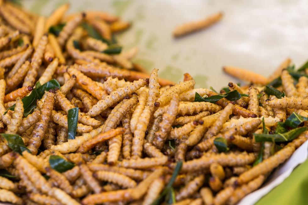 מכילים ריכוז גבוה של חלבונים, ויטמינים וחומצות שומן. זחלי פרפרים למאכל (צילום: shutterstock)