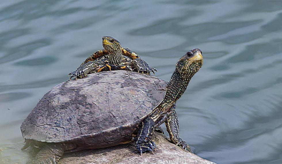צבי ביצות במעגן מיכאל | אלי לוין