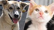 צילום: ליאת מאיר, העמותה לחתולי רעננה | ראשון לציון חיות