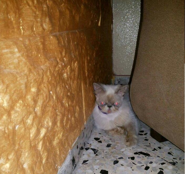 В первые часы дома Соня пряталась за креслом