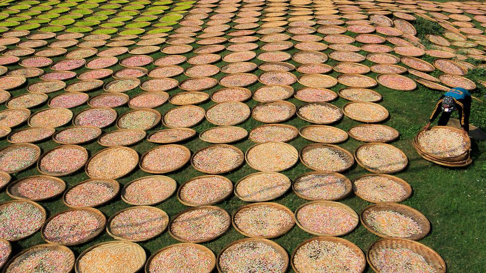 ייבוש קרקרים בכפר קנאנגה, אינדונזיה (צילום: רויטרס, Antara Foto/Dedhez Anggara)