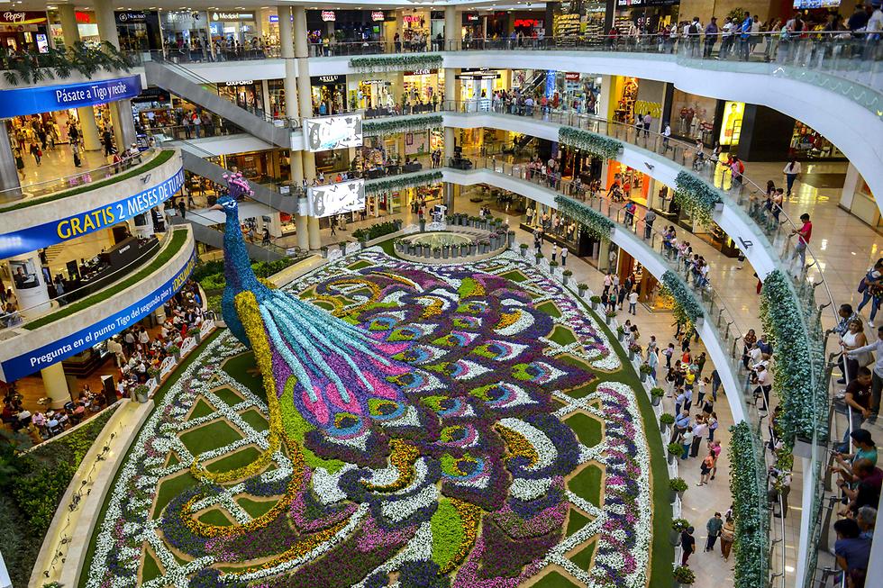 פסל הטווס שבתמונה, שמתנשא לגובה 12 מטרים, הורכב מ-182 אלף פרחים לרגל פסטיבל הפרחים במדיין, קולומביה (צילום: AFP)