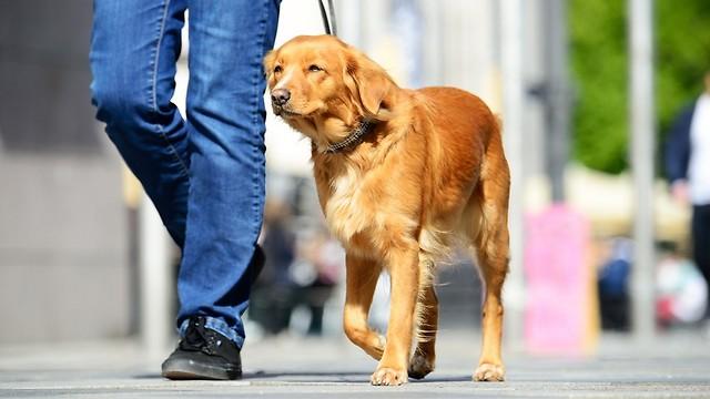 טיול ארוך עם הכלב. 120 קלוריות בהנאה (צילום: shutterstock)
