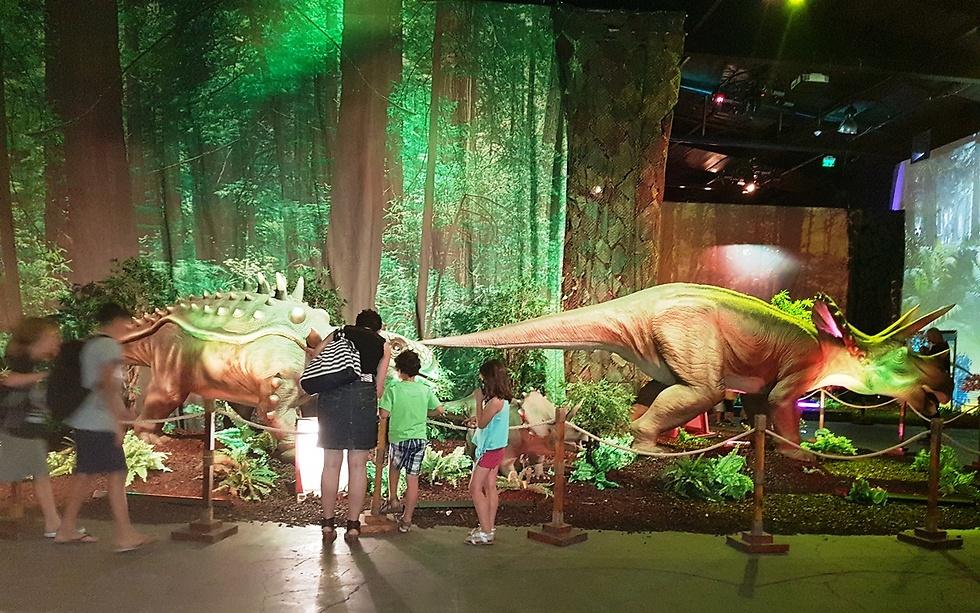 ללמוד על חיות הענק (צילום: קרן נתנזון ויץ)