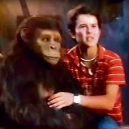הקוף הוחלף בגמד. 'קופיקו'