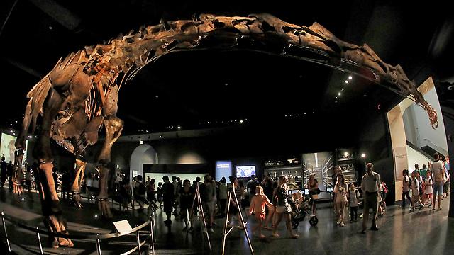 הדינוזאור העצום, במוזיאון ההיסטוריה של הטבע בניו יורק (צילום: רויטרס)