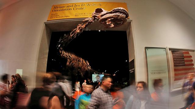 הראש פורץ החוצה. השלד במוזיאון (צילום: רויטרס)