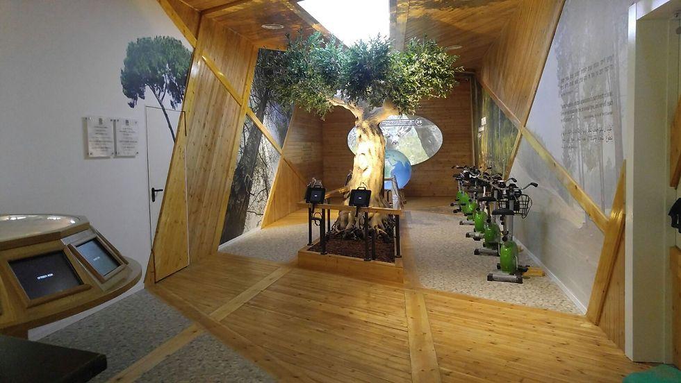 """הפעילויות ביער. הותאמו לעידן הטכנולוגי (צילום: ארכיון הצילומים של קק""""ל)"""