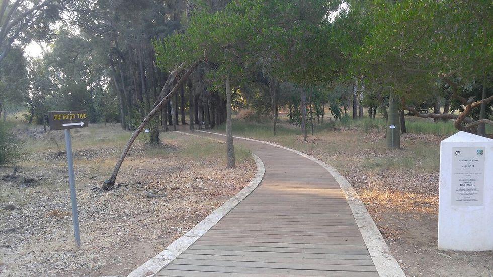 """היער החדש של ישראל (צילום: ארכיון הצילומים של קק""""ל)"""