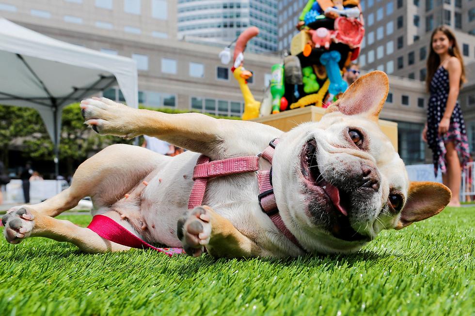 כלבה משתתפת בתערוכת האומנות הראשונה באמריקה לכלבים. מנהטן, ניו יורק (צילום: רויטרס) (צילום: רויטרס)