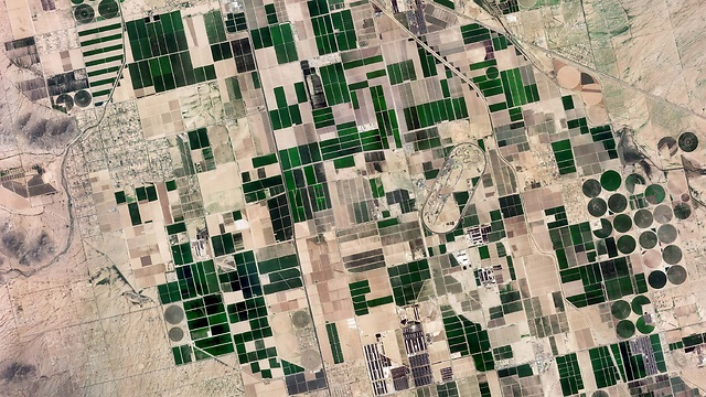 שטחים חקלאיים בפיניקס (צילום: ונוס) (צילום: ונוס)