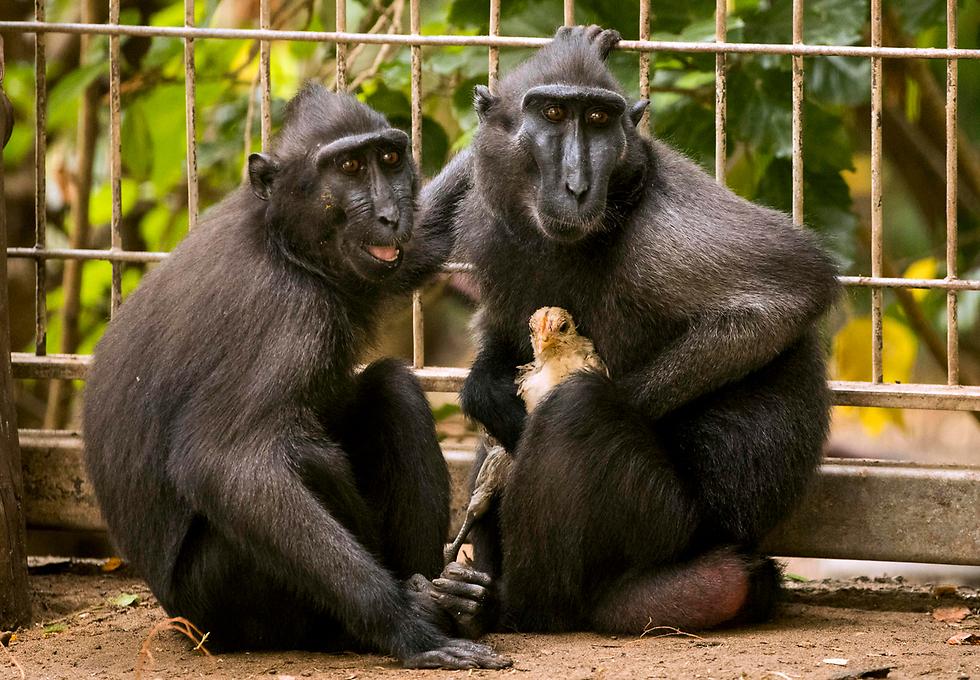 ללמוד עם החיות (צילום: AFP)