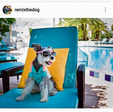 בצילומים: כלבים בעלי חשבון באינסטגרם,שעשויים להשתתף בקמפיין