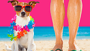 Time for a doggy vacay! Bring your pup to Israel