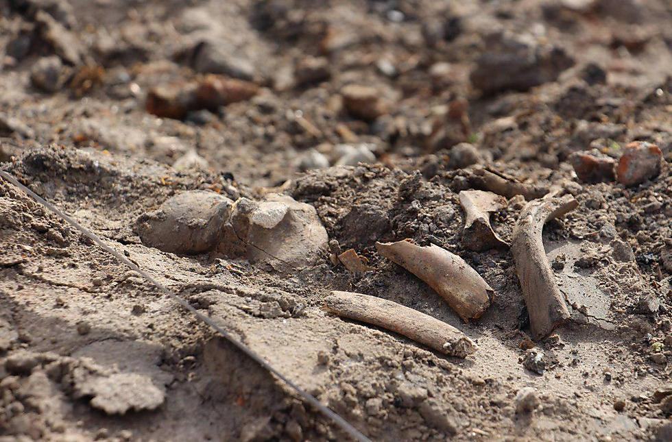 Jewish bones litter the site of two soon-to-be-constructed towers (Photo: zvarot.by) (Photo: zvarot.by)