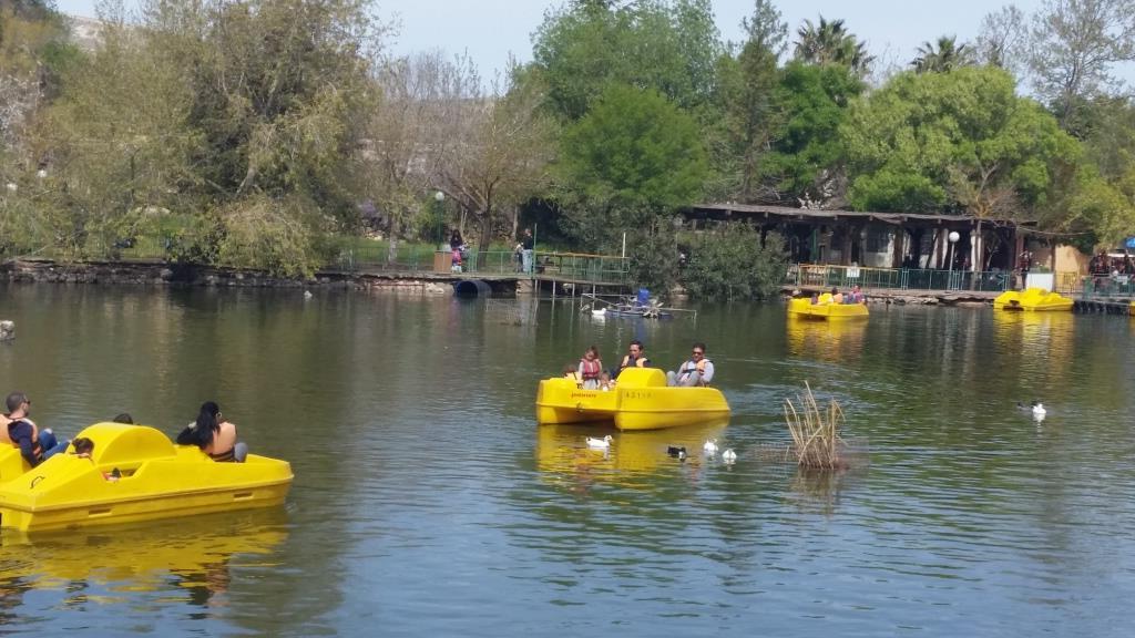 """האגם החייתי (צילום: יח""""צ)"""