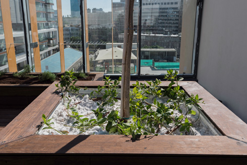 בתוך כל הרעש הוויזואלי של העיר, צמחים נטועים בתוך חומר קל שלא מעמיס משקל על הבניין (צילום: ליאור גרונדמן)