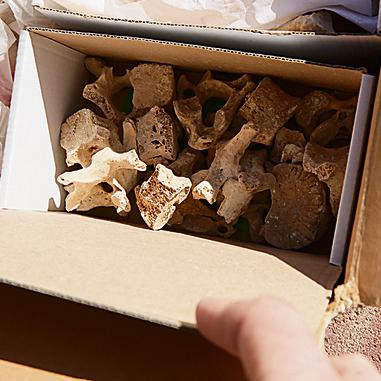 עצמות המריבה