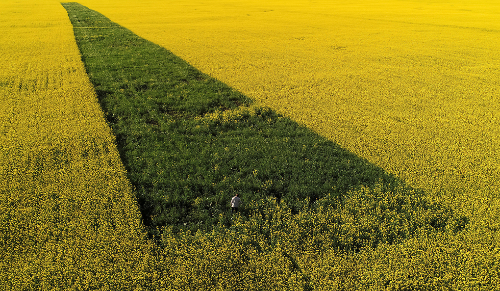אדם בשדה ברסנויארסק, רוסיה (צילום: רויטרס)