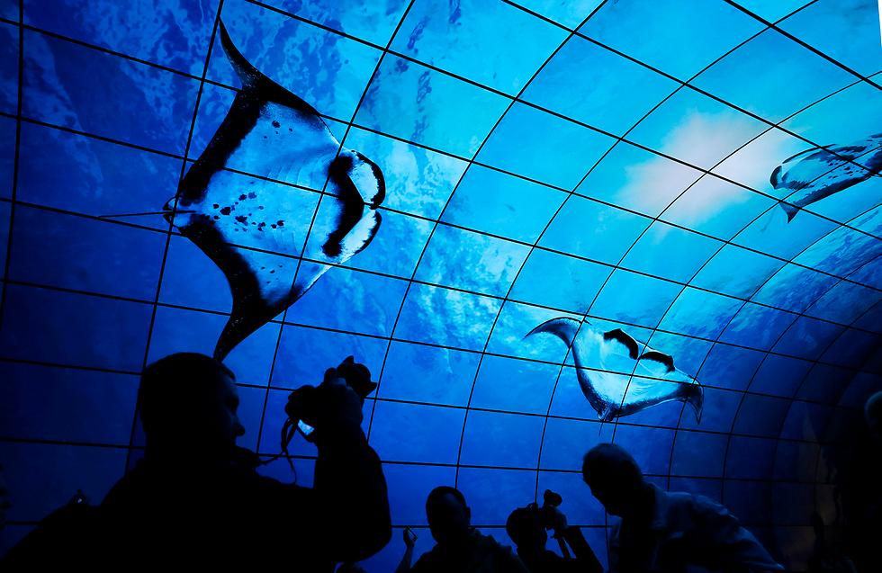 מסכים מחומר אורגני פולט אור בתערוכה בינלאומית של מוצרי אלקטרוניקה בברלין (צילום: EPA)