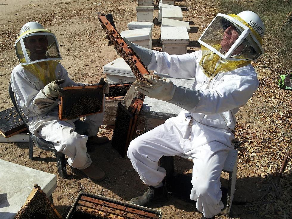 (צילום: באדיבות מועצת הדבש) (צילום: באדיבות מועצת הדבש)