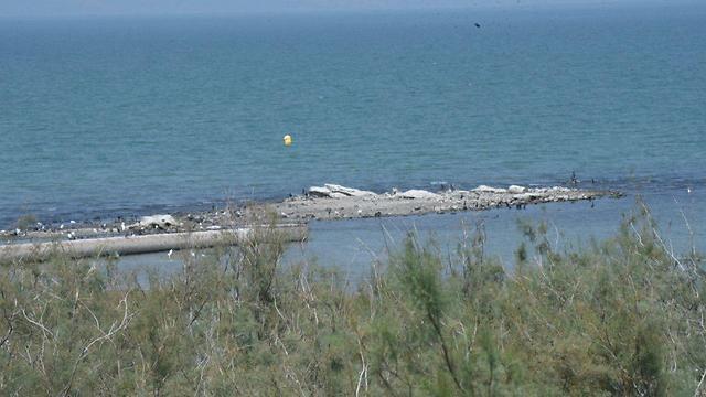 האי בכנרת (צילום: אביהו שפירא) (צילום: אביהו שפירא)