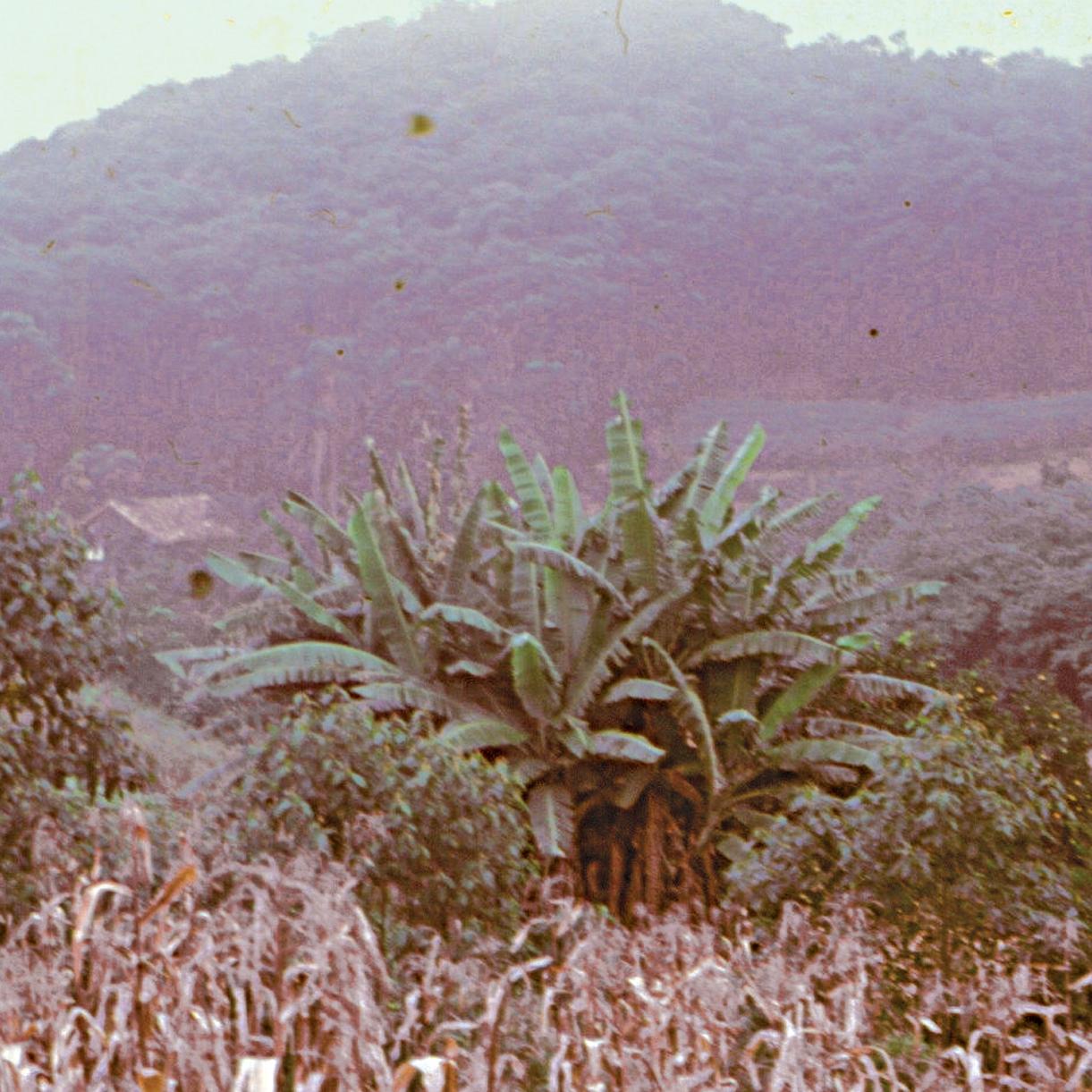 החווה בצילום מרוחק