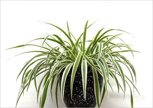 איזה צמח יקבל את פניכם במבואה, ואיזה ישלים את המהפך בסלון? לחצו לסרטון (צילום: לימור הרצוג אהרוני)