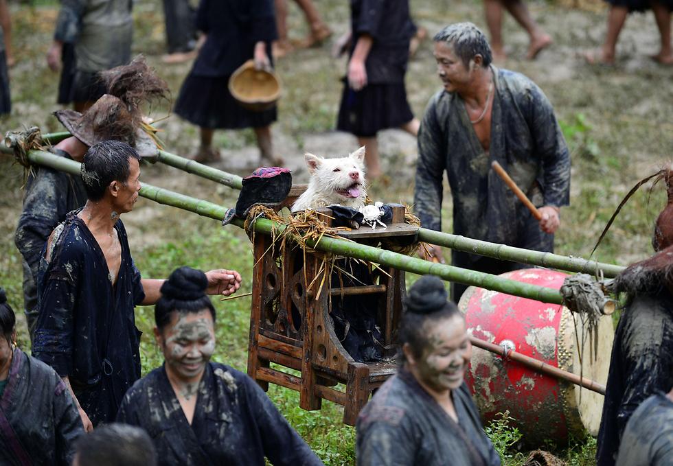 פסטיבל מסורתי ביום נשיאת הכלב של המיעוט האתני מיאו במחוז גוויג'ואו בסין (צילום: AFP)