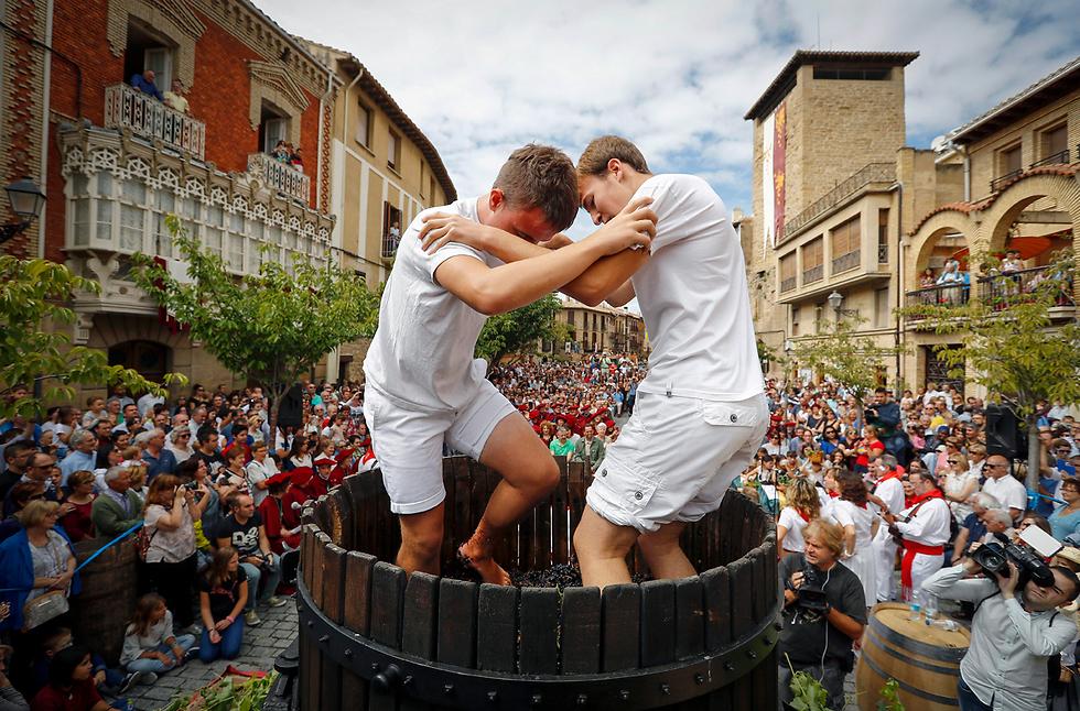 דורכים על ענבים בפסטיבל יין באוליטה, ספרד (צילום: EPA)