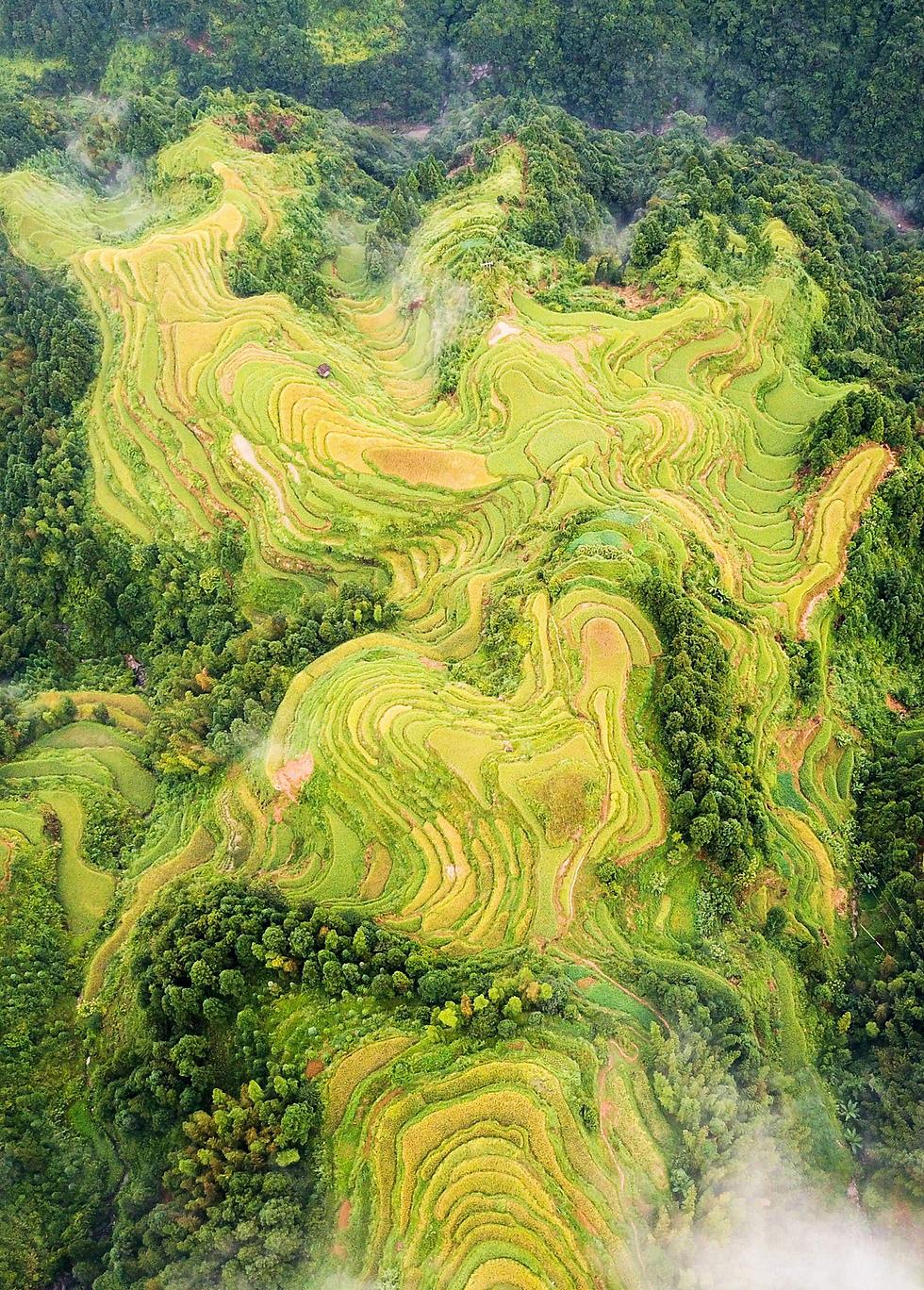 שדות אורז בגוויג'ואו, סין (צילום: AFP)