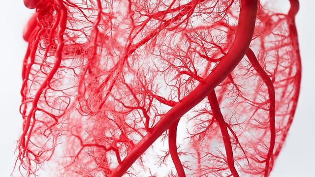 הופכים לחדירים יותר כשיש סרטן. כלי דם (צילום: shutterstock)