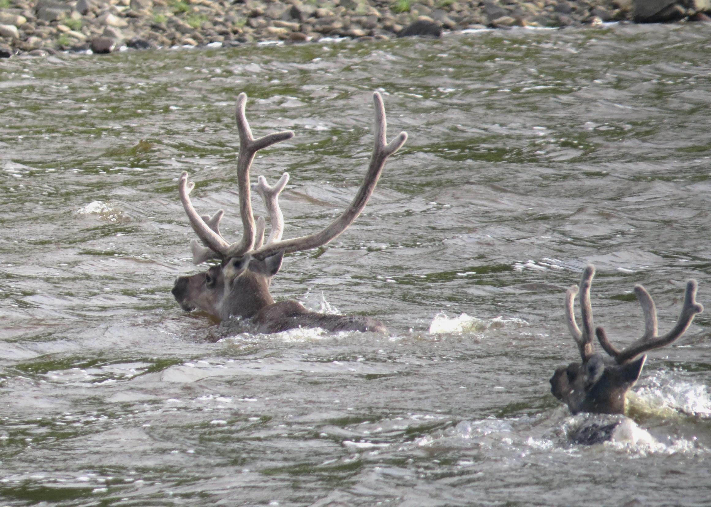 איילי בר חוצים את הנהר (צילום: רונית ישראלי) (צילום: רונית ישראלי)