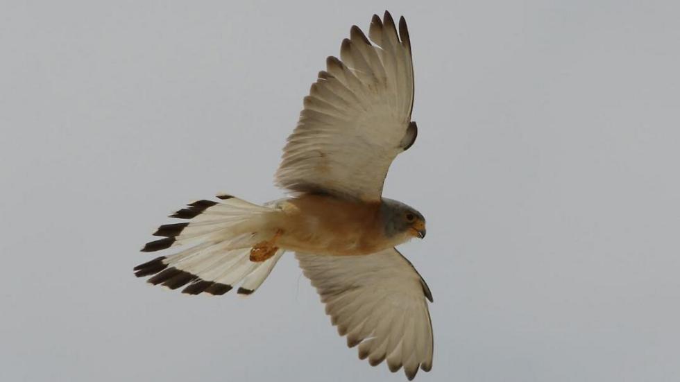 (צילום: מידד גורן, החברה להגנת הטבע)