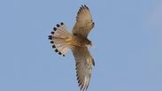 צילום: מידד גורן, החברה להגנת הטבע