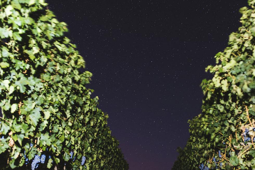 טיול לילי תחת התפאורה הכי יפה של הטבע (צילום: עדי פרץ)
