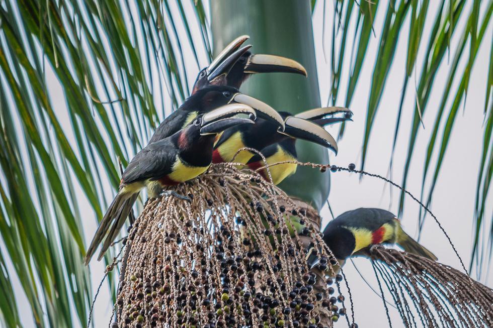 ציפור חברותית שחיה בלהקות (צילום: shutterstock)