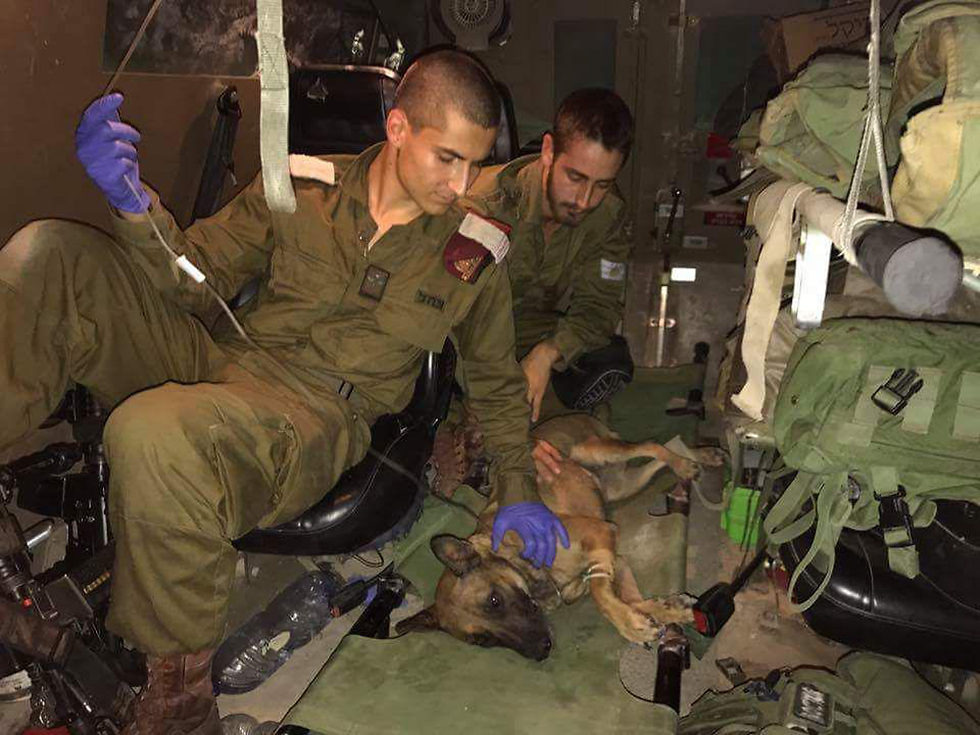 The injured dog found near the border receiving medical attention