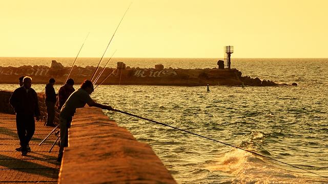 עדיף בחכה ולא ברשת, דג טרחון (צילום: shuttertock) (צילום: shuttertock)